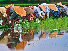 準備到越南相親娶越南新娘前該有的認知與準備